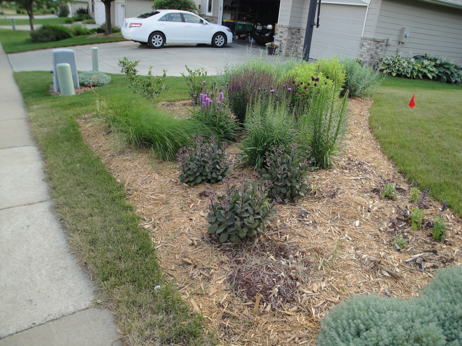 front garden after planting