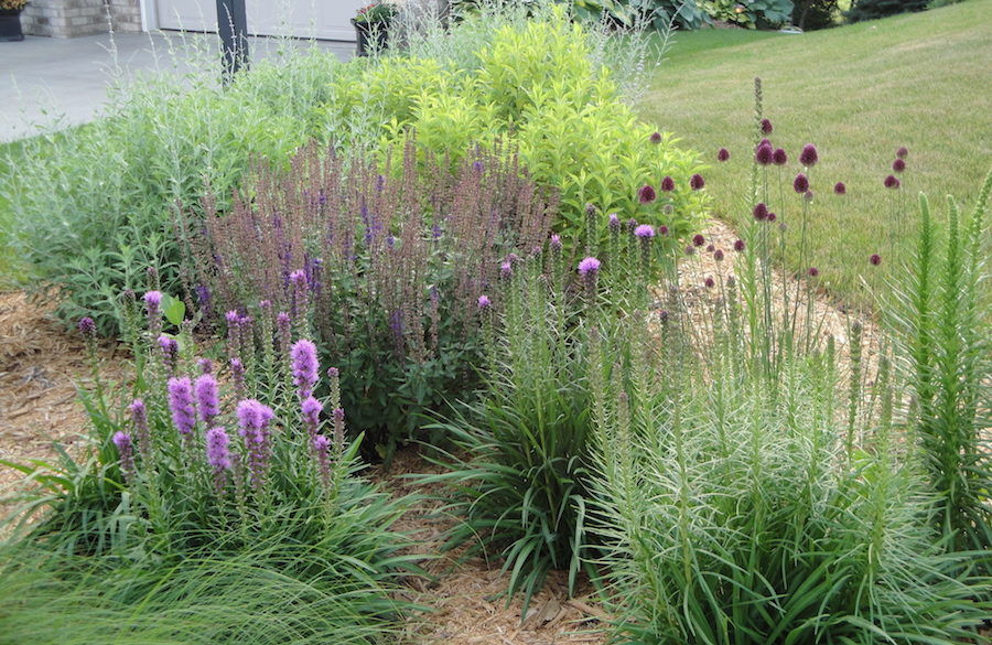 garden with prairie plants
