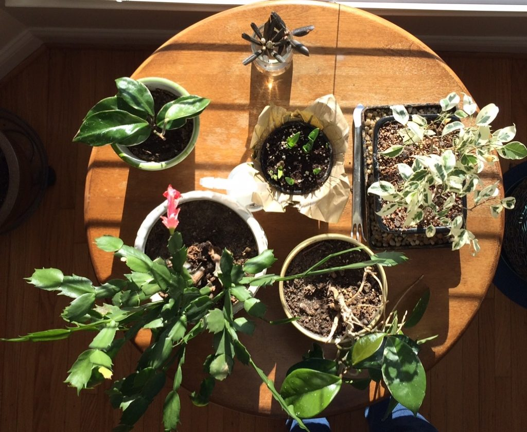 houseplants in sun
