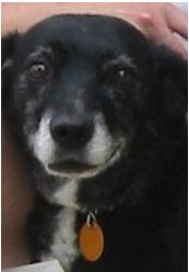 sweet older dog