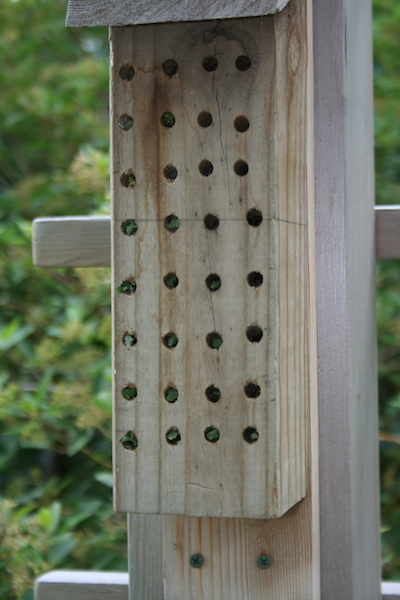 bee condo with bees