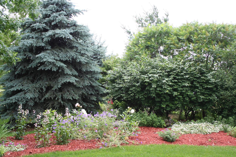 sumac in garden bed