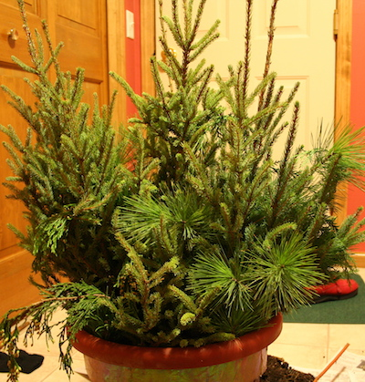 holiday pot with greens
