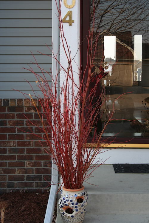 red twig dogwood in container