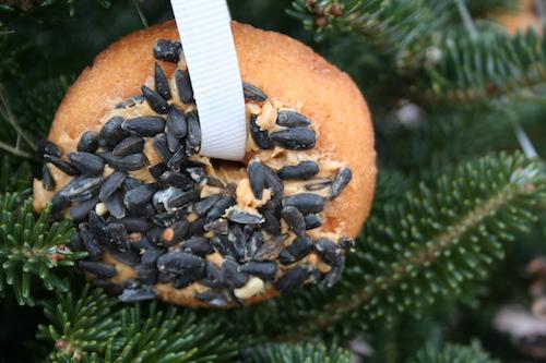 doughnut ornament for bird tree