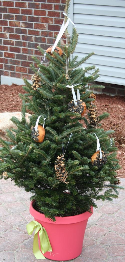 holiday tree for birds