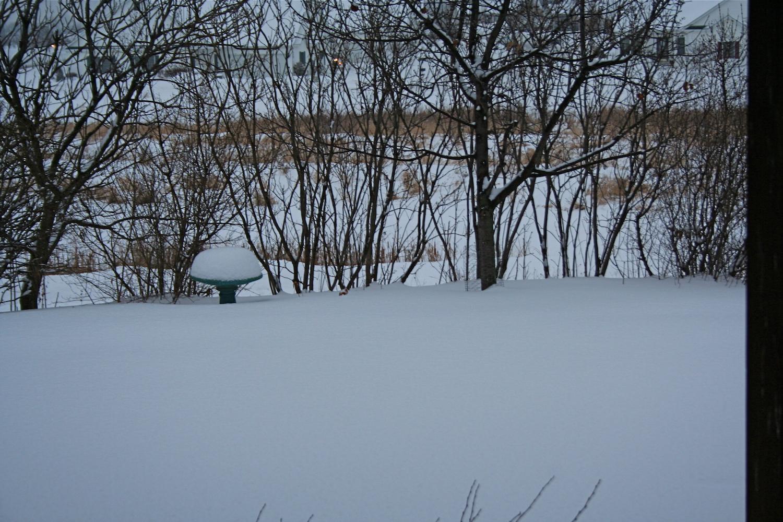 snow on garden