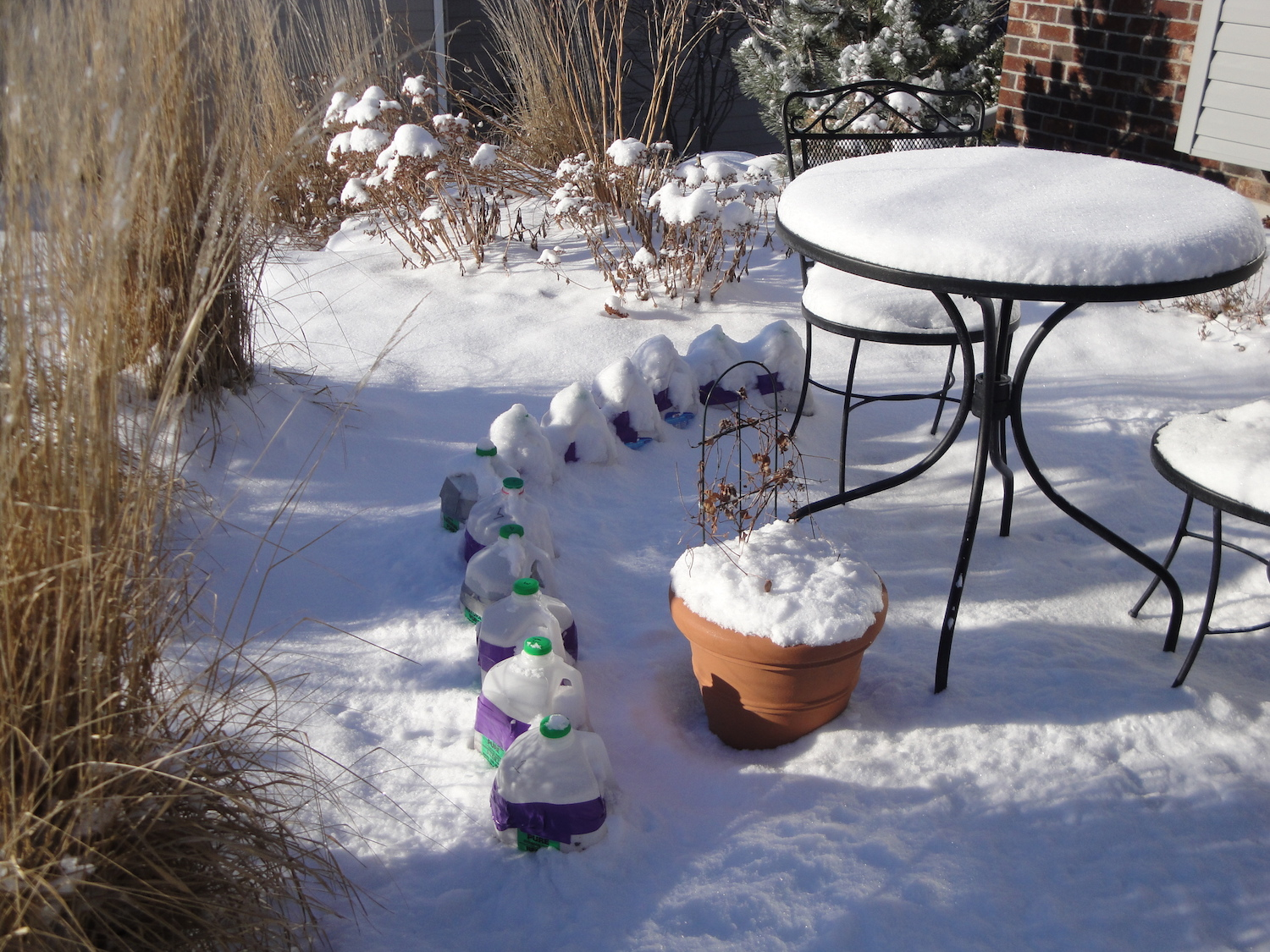 winter sowing containers in snow
