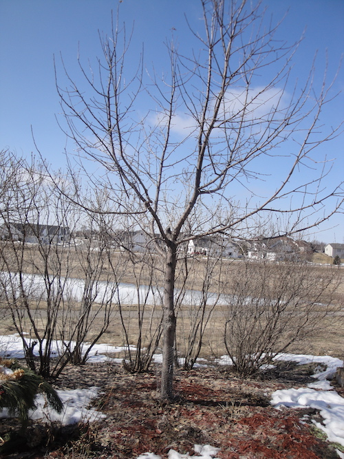 pruned bare tree