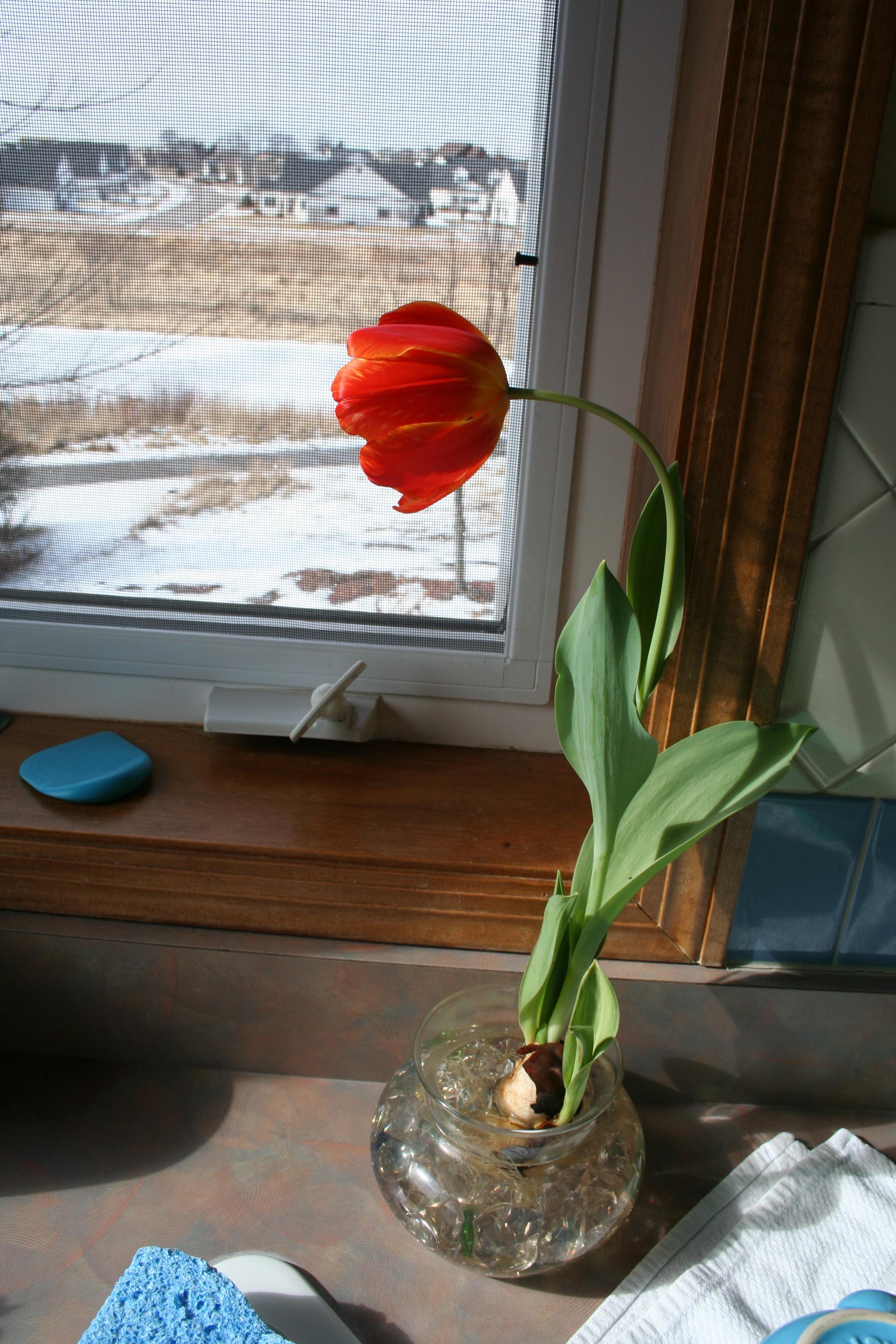 First Bloom My Northern Garden