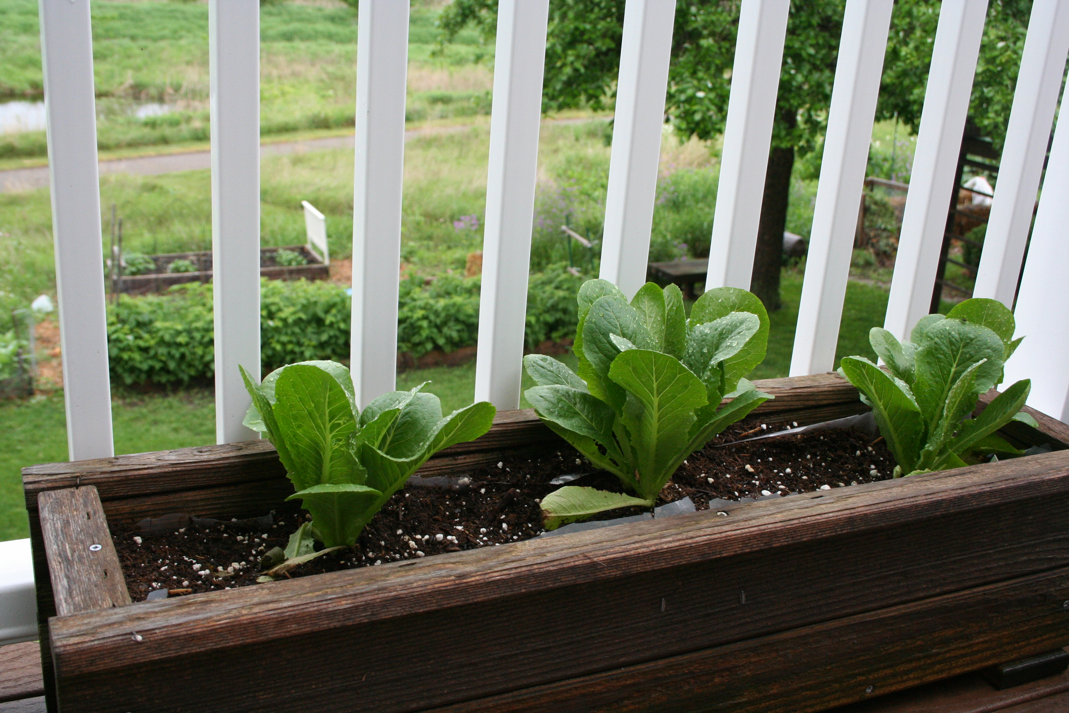 Deck Vegetable Garden is Looking Good My Northern Garden