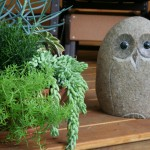 Owl and succulent bowl