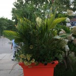 Tangerine pot and tropical plantings
