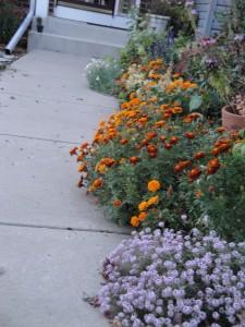 plants on sidewalk