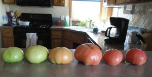 green tomatoes ripen