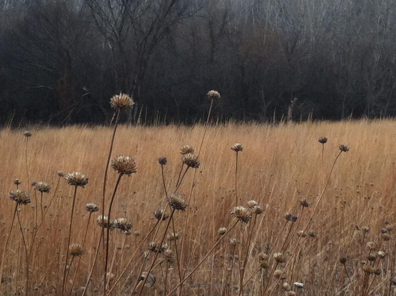 seeds in Carleton arboretum in Minnesota