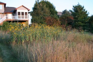 meadow 2011