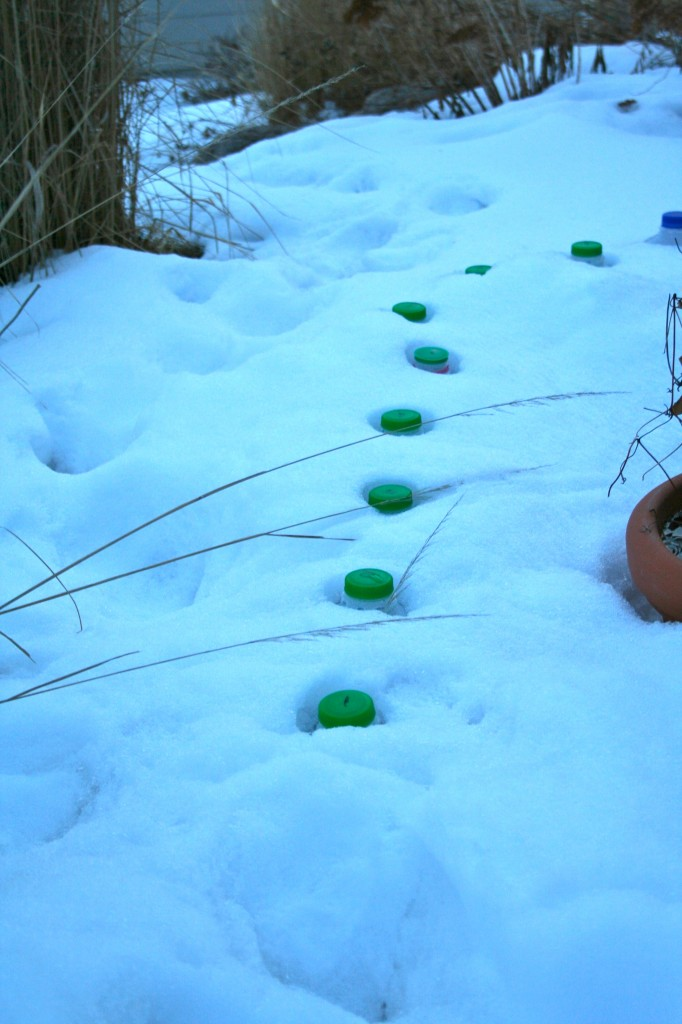 wintersowing