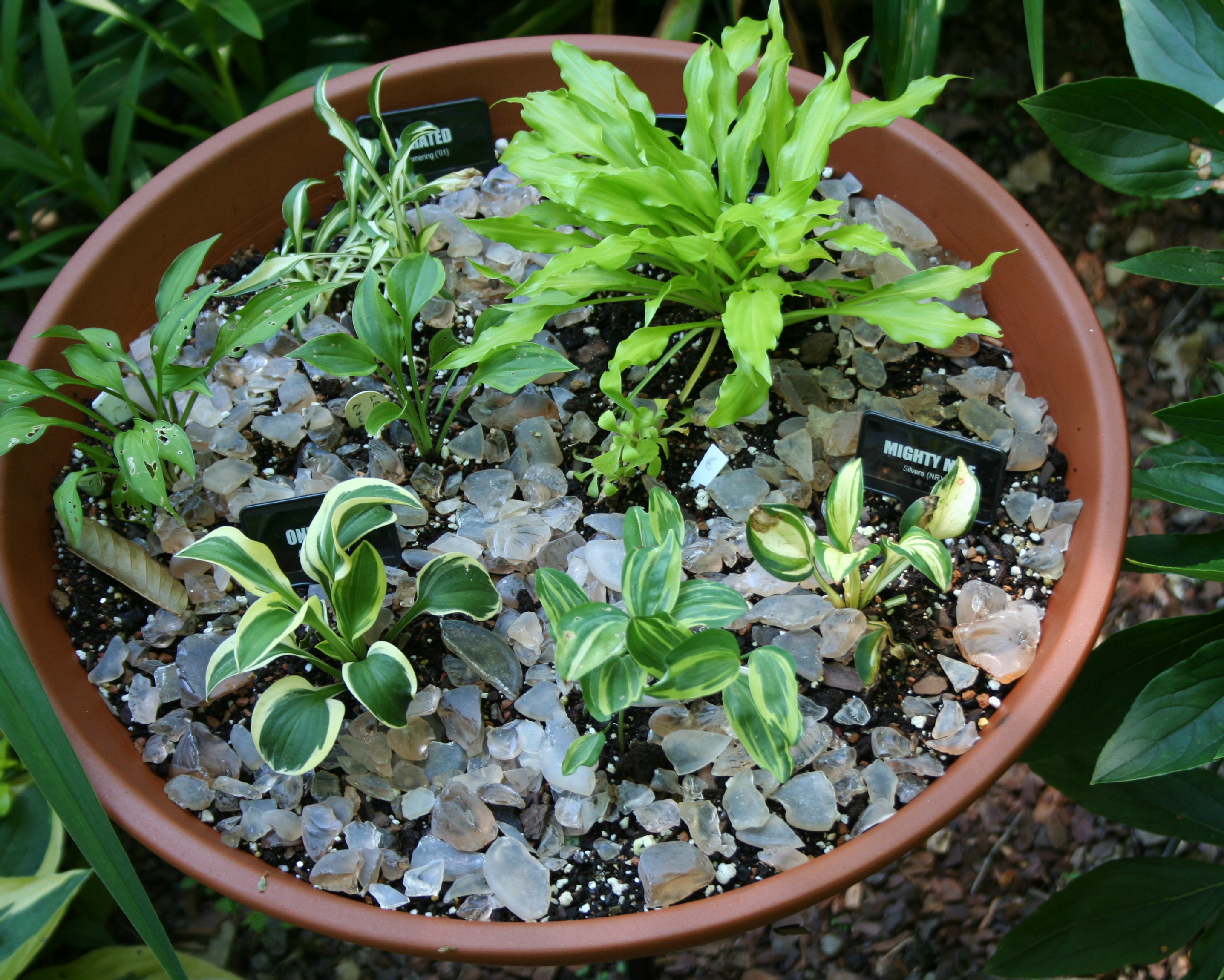 Group therapy for gloomy gardeners my northern garden - Dish garden containers ...