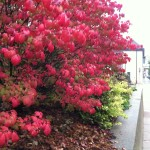 Wow! This burning bush looks so bright.