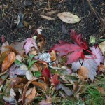 Even the leaves on the ground are pretty now.