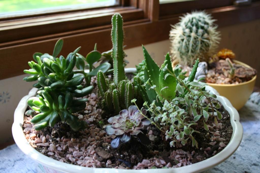 succulent before
