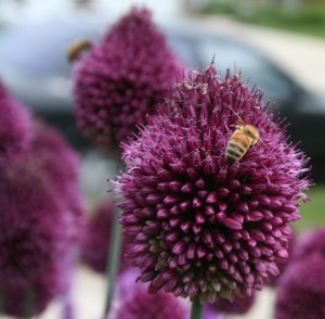 Bees and gardening for pollinators are on the agenda at several horticulture days this year.