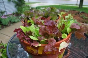 mixed lettuce bowl