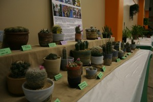 Cacti on display at the Minnesota State Fair potted plant show.