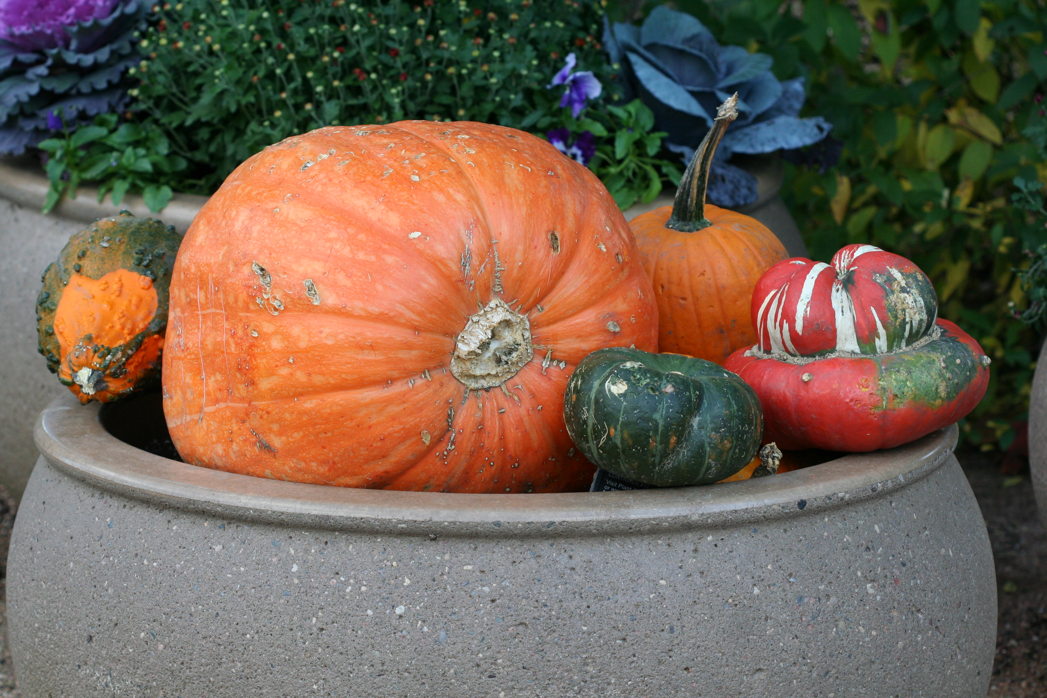 The inspiration for my fall container