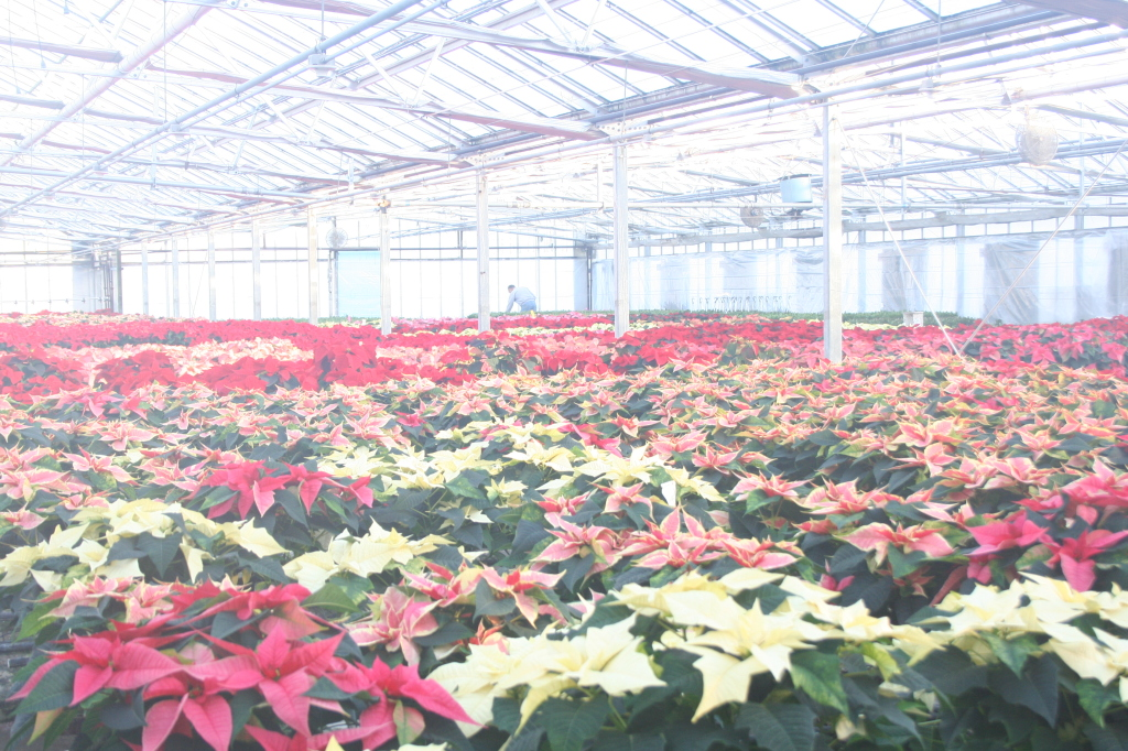 My camera fogged up a bit when we first got to the greenhouses. They felt so warm, compared to the cold outside.