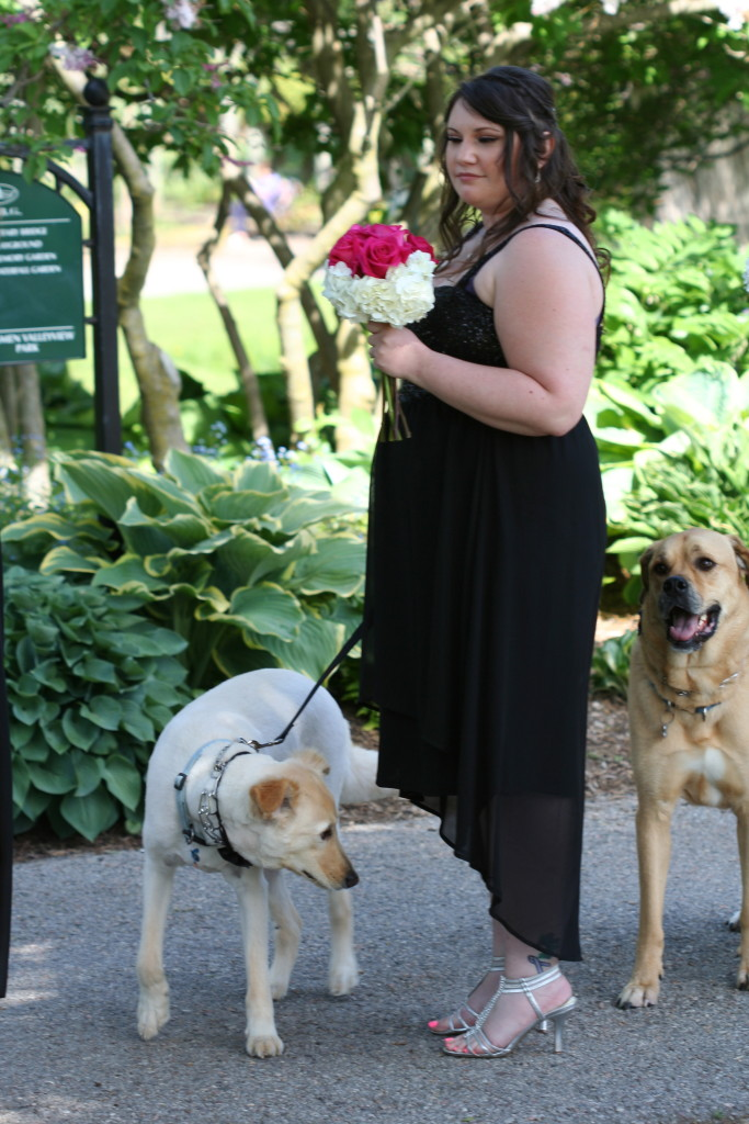These bow-tie clad dogs served as attendants at their owner's wedding, one of many at the gardens the day we visited.