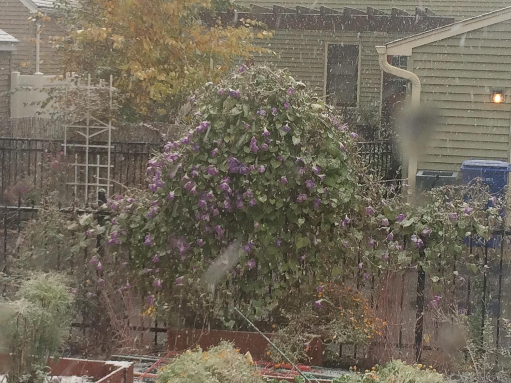 Fall Gardening – My Northern Garden