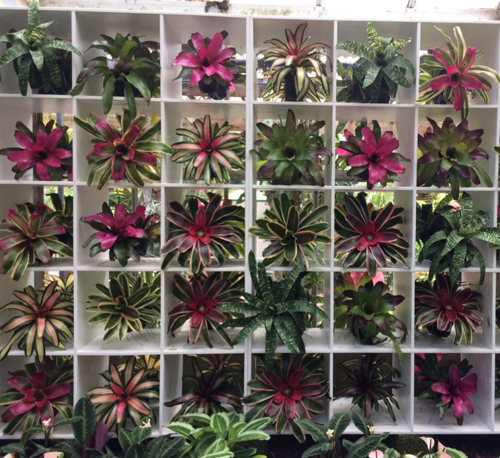 Bromeliads in a display case Marie Selby garden
