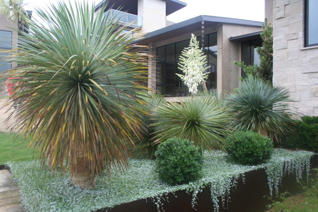 contemporary garden with corten planter