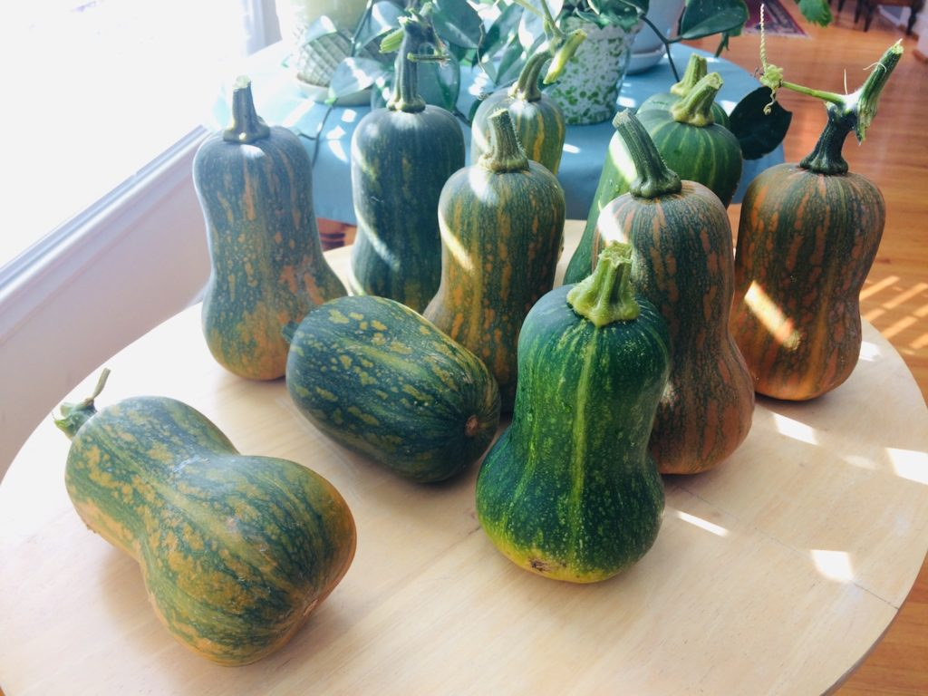 squash on table