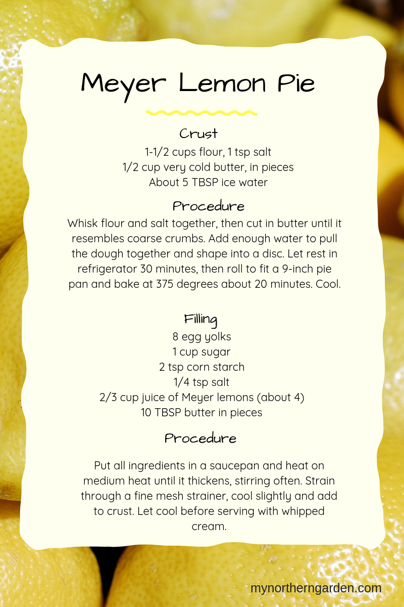 Recipe for meyer lemon pie