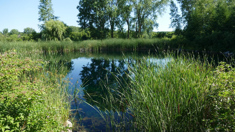 pond near Millennium Garden
