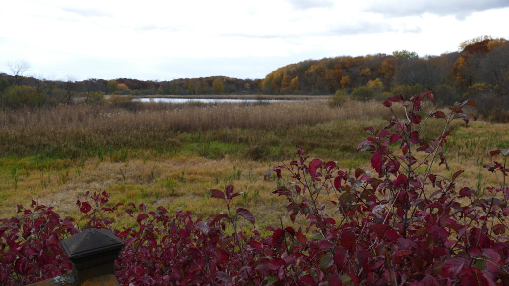 Green heron pond in fall