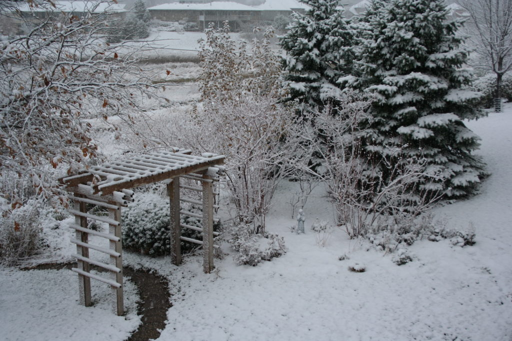 native evergreens and garden in snow